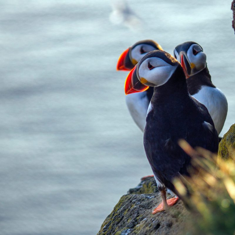 Arnanes Country Hotel - Puffin